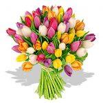 Lalelele – flori cu povesti speciale si o simbolistica aparte