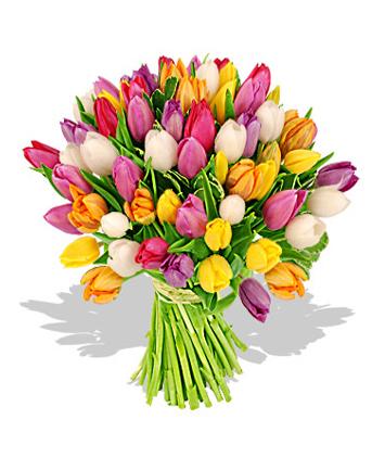Lalelele - flori cu povesti speciale si o simbolistica aparte